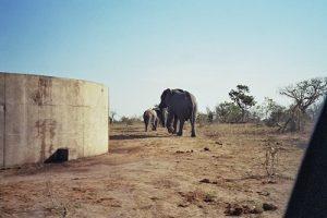 Elefanten_II