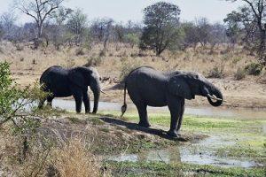 Elefanten_III