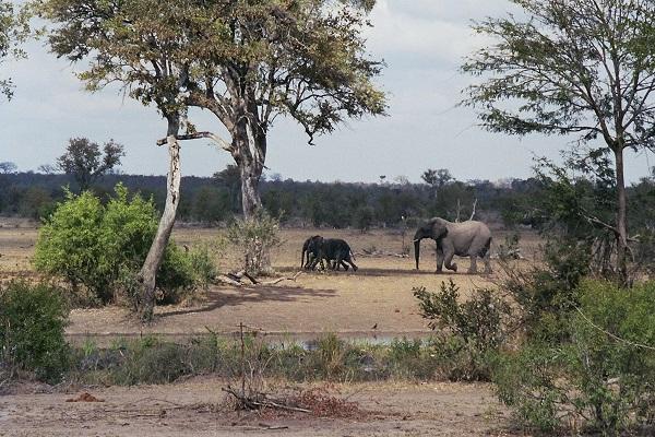 Elefanten_Wasserloch